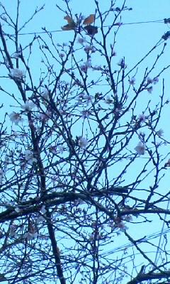 十月桜の写真