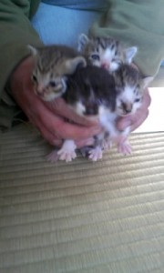 子猫の写真2