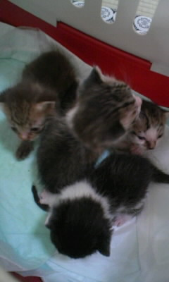 子猫の写真1